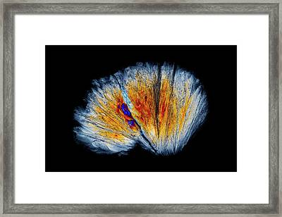Serine Amino Acid Framed Print by Antonio Romero