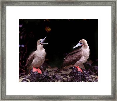 South America, Ecuador, Galapagos Framed Print