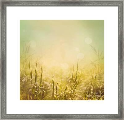 Spring Background Framed Print