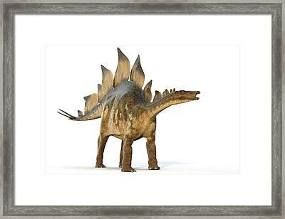 Stegosaur Dinosaur Framed Print