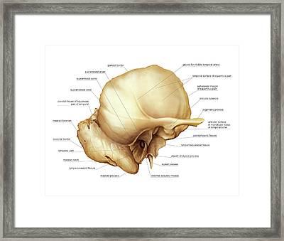Temporal Bone Framed Print by Asklepios Medical Atlas