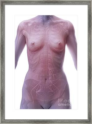 The Nervous System Female Framed Print