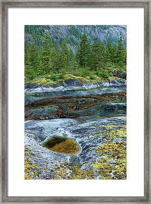 Usa, Alaska, Tongass National Forest Framed Print by Jaynes Gallery