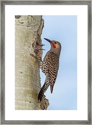 Usa, Colorado, Rocky Mountain National Framed Print