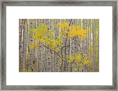 Usa, Colorado, White River National Framed Print