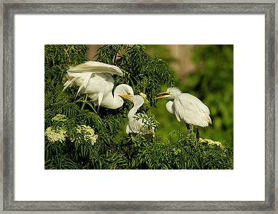 Usa, Florida, Gatorland Framed Print by Jaynes Gallery