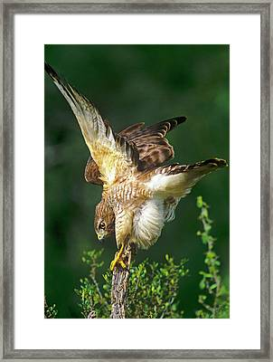 Usa, Texas, Rio Grande Valley, Mcallen Framed Print by Jaynes Gallery