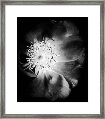 7440-22-4 Framed Print