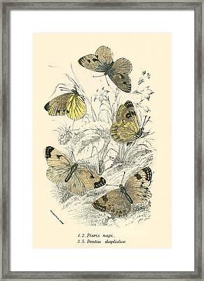 Butterflies Framed Print