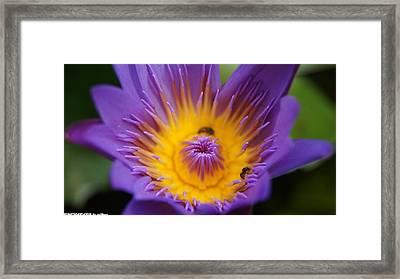 Lotus  Framed Print by Gornganogphatchara Kalapun