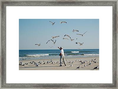 79 Seagulls Framed Print by Linda Brown