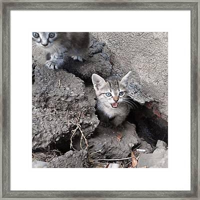 #Котята Framed Print