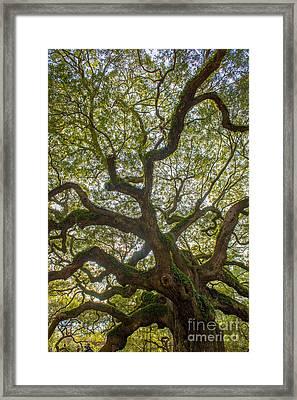 Island Angel Oak Tree Framed Print