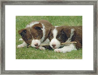 Border Collie Dog Portrait Framed Print by Olde Time  Mercantile