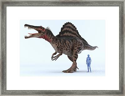 Dinosaur Spinosaurus Framed Print by Science Picture Co