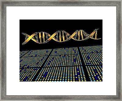 Dna Microarray And Double Helix Framed Print by Pasieka