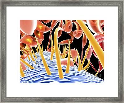 E. Coli Ehec Bacteria, Computer Artwork Framed Print