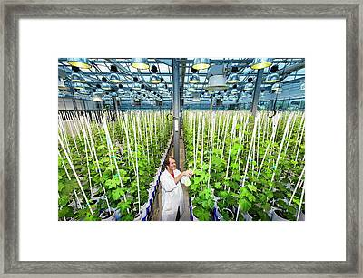 Effect Of Climate Change On Wine Framed Print