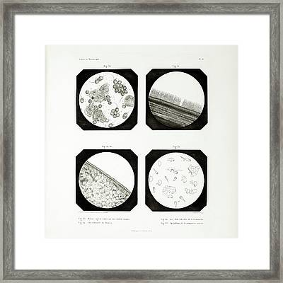 First Ever Photomicrographs Framed Print by British Library