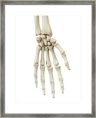 Human Hand Bones Framed Print by Sciepro