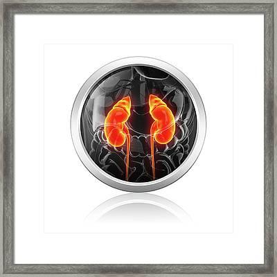 Human Kidneys Framed Print by Pixologicstudio