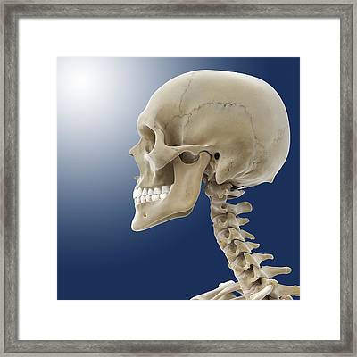 Human Skull, Artwork Framed Print by Science Photo Library