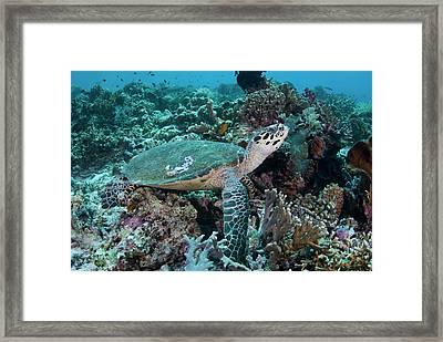 Indian Ocean, Indonesia, Komodo Framed Print by Jaynes Gallery