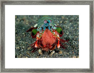 Indian Ocean, Indonesia, Sulawesi Framed Print