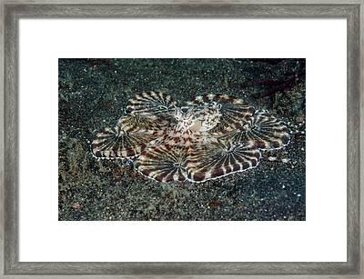 Indonesia, Lembeh Strait Framed Print by Jaynes Gallery