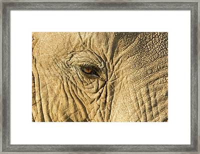 Kenya, Samburu National Reserve Framed Print