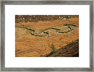 Mountain Biotope Framed Print