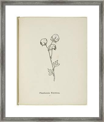 Nonsense Botany By Edward Lear Framed Print