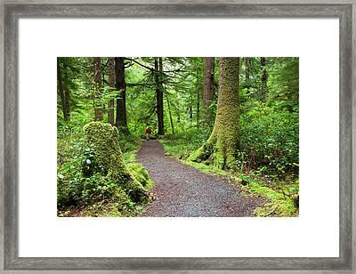 Or, Oregon Coast, Oswald West State Framed Print