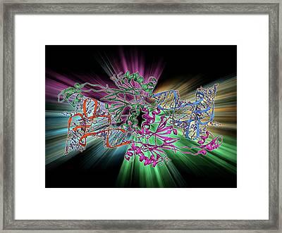 Ribonuclease Bound To Transfer Rna Framed Print