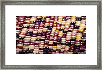 Slit-scan Image Of Flint Corn Framed Print