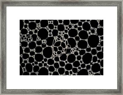 Soap Bubble Foam Framed Print by Kym Cox