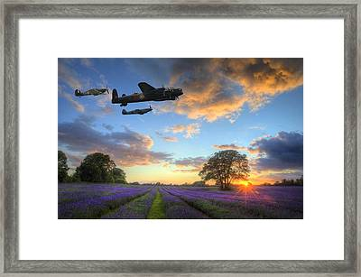 Stunning Atmospheric Sunset Over Vibrant Lavender Fields In Summ Framed Print by Matthew Gibson