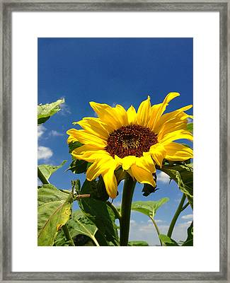 Sunflower Framed Print by Les Cunliffe