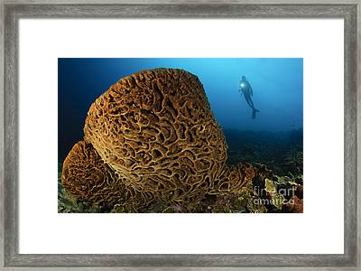 The Salvador Dali Sponge With Intricate Framed Print by Steve Jones