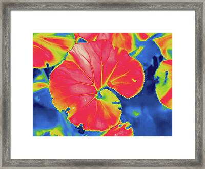 Thermogram Framed Print by Science Stock Photography