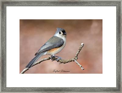 Tufted Titmouse Framed Print