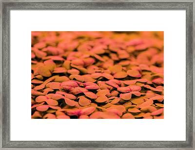 Underground Horticulture Framed Print