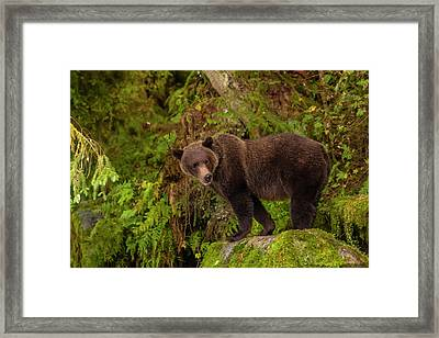 Usa, Alaska, Tongass National Forest Framed Print