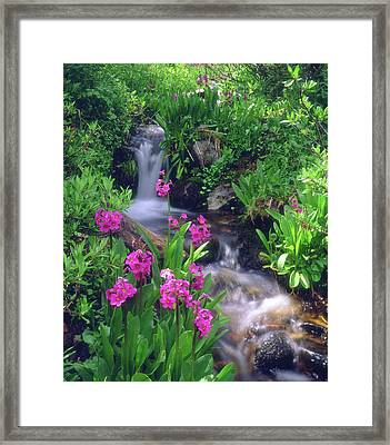 Usa, Colorado, Rocky Mountains Framed Print by Jaynes Gallery