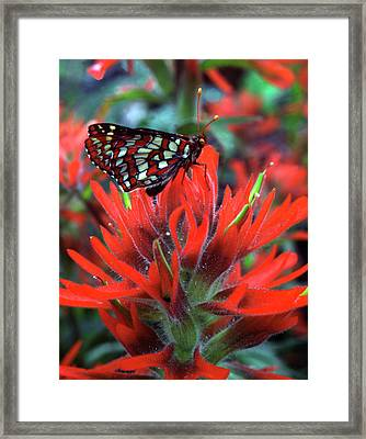 Usa, Oregon, Mt Hood National Forest Framed Print by Jaynes Gallery