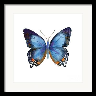 Insects Framed Prints