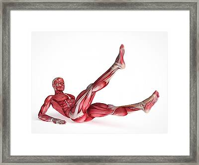 Human Muscular System Framed Print