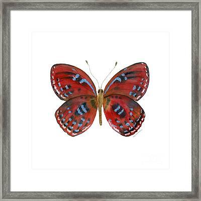 81 Paralaxita Butterfly Framed Print
