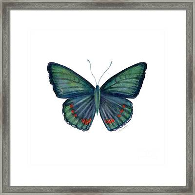 82 Bellona Butterfly Framed Print by Amy Kirkpatrick