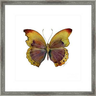 84 Gold-banded Glider Butterfly Framed Print by Amy Kirkpatrick